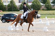 Horse for sale - LADY LEY ROEST