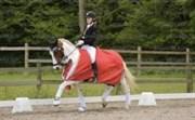 Hest til salg - Marjan