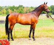 Horse for sale - DMJ SEBALDI