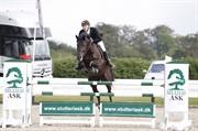 Horse for sale - DAME NOIRE VAN OVERIS Z