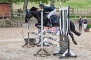 Horse for sale - DON FREDERIK