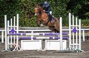 Horse for sale - BRUNO V/D GORTEHOEVE