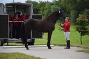 Horse for sale - LINDBALLE'S ADDICTION