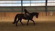 Hest til salg - PASCINELL