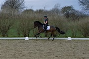 Horse for sale - SS NICE FLIGHT