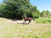 Horse for sale - KAZOO ESKEBJERG
