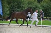 Hest til salg - LUCA ENGSVANG