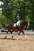 Horse for sale - HJORTHS WELTIANO