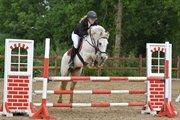 Horse for sale - CAZETTI'S MINIMAN