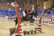 Horse for sale - SKOVSLANDS ELLIOT