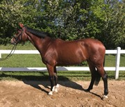 Horse for sale - COME ON JOY