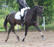 Horse for sale - HERA'S ZOLUNA