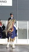 Horse for sale - AUREL II