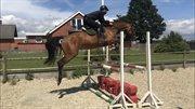 Horse for sale - LILLE ASBJERGS LA VITA