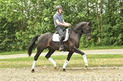 Horse for sale - ADIEGO ROYAL