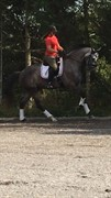 Horse for sale - TJØRNELYS KINGSTON