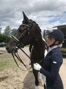 Horse for sale - VIRKELYSTS SOLERO