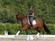 Horse for sale - Jalousi Skovløber