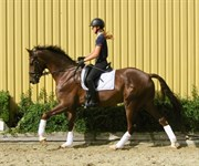 Horse for sale - DON ANTELLO