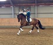 Horse for sale - FLOUTRUP'S TIBACHO