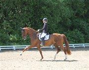 Horse for sale - OLIVIA OVERSKOVLUND