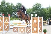 Hest til salg - P'ASSION