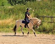 Horse for sale - BALDER BINDEBJERG