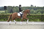 Horse for sale - AAGAARDENS LIANDRO