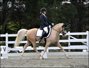 Horse for sale - Mr. Magic
