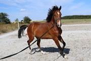 Horse for sale - Tai Vagger