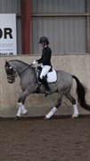 Horse for sale - CAMPINO