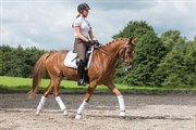 Horse for sale - BARNABY BITSCH
