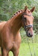 Horse for sale - SERUPGAARDS DELILAH