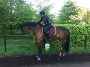 Horse for sale - KIDHOLMS LORD WATZON