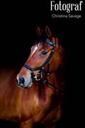 Hest til salg - MALOBA'S TEMPARINA