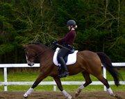 Horse for sale - DAMGÅRDENS LEONARDO