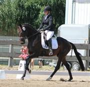 Horse for sale - Dimension AJK