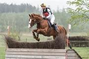 Horse for sale - Sarcos De Vesquerie