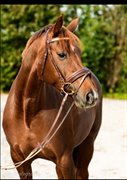 Horse for sale - INSTANT REPLAY H