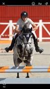 Hest til salg - CORNLAND