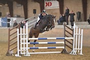 Horse for sale - BALEICE