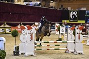 Hest til salg - LUCKY LUX