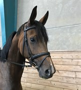 Horse for sale - AIRINESS