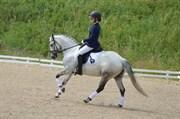 Horse for sale - HAAHR'S TOSCANA