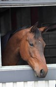 Horse for sale - REMEMBER ME