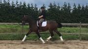 Horse for sale - SOLGAARDENS TEAR DROP