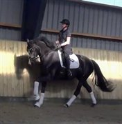 Horse for sale - DIDDELIDU KILEN