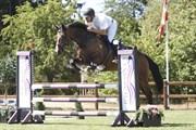 Horse for sale - FØLBY'S APRIL