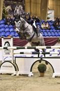 Hest til salg - NEMO
