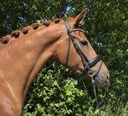 Horse for sale - GREEN HOPES LEXIE
